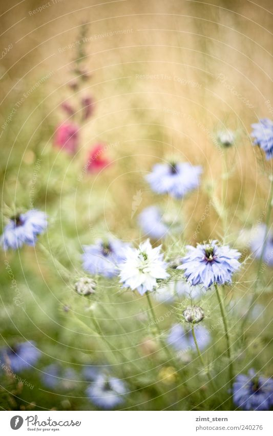 Beautiful Flower Green Blue Plant Summer Yellow Meadow Blossom Grass Bright Field Pink Esthetic Growth Wild