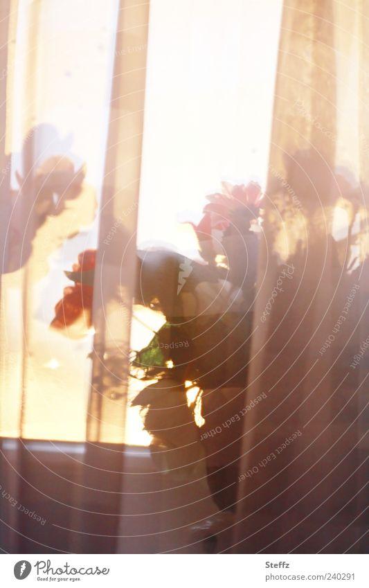 Light incidence through the curtain Curtain Window Window board Window pane Vail Drape Flare Screening Mood lighting Flowerpot Pot plant Houseplant