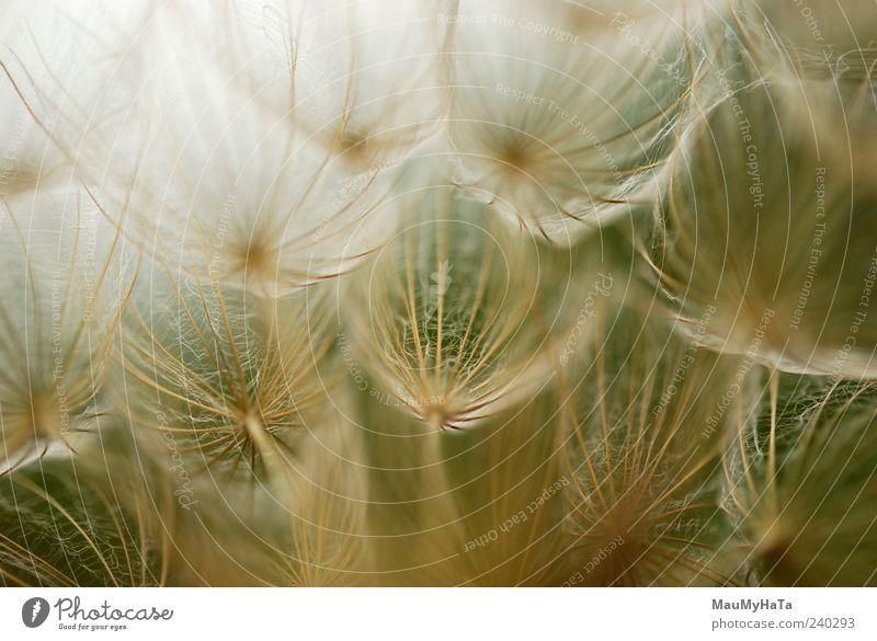 Dandelion Sky Nature Plant Colour Summer Flower Grass Freedom Horizon Art Field Energy Elements Infinity Chaos Teamwork