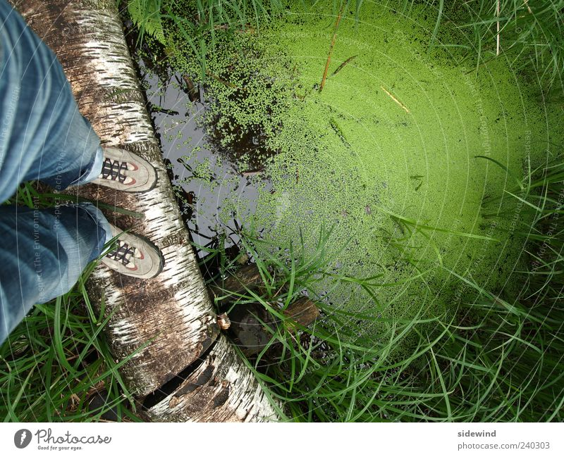 Nature Water Green Plant Environment Grass Lake Natural Adventure Stand Tree trunk Balance Pond Marsh Bog Hiking boots