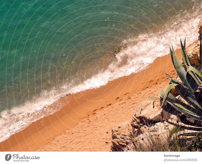 Nature Blue Water Green Summer Ocean Warmth Coast Sand Stone Brown Waves Beautiful weather Footprint Thorny Cactus