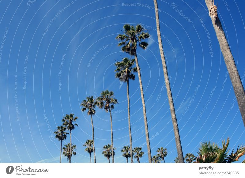 curvic San Diego Palm tree Sky Blue Clouds Nature California Vacation & Travel Relaxation Row Curve Freedom Summer Blue sky Cloudless sky Deserted