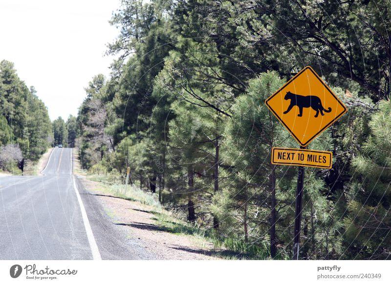 Street Lanes & trails Signs and labeling Transport Signage Illustration Traffic infrastructure Warning sign Road sign Puma