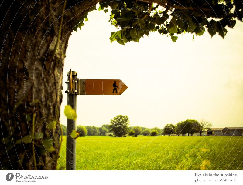 Nature Vacation & Travel Summer Tree Landscape Environment Meadow Grass Natural Going Signs and labeling Hiking Trip Beautiful weather To go for a walk Footpath