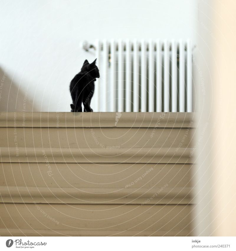 *maunz* Stairs Staircase (Hallway) wooden staircase Pet Cat Kitten Domestic cat 1 Animal Baby animal Heater Discover Looking Stand Small Curiosity Cute Black