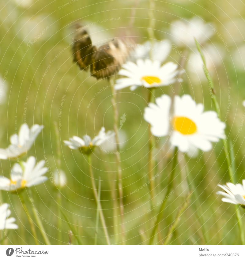 Nature Green Beautiful Plant Summer Flower Animal Environment Grass Spring Blossom Brown Flying Wild animal Natural Free