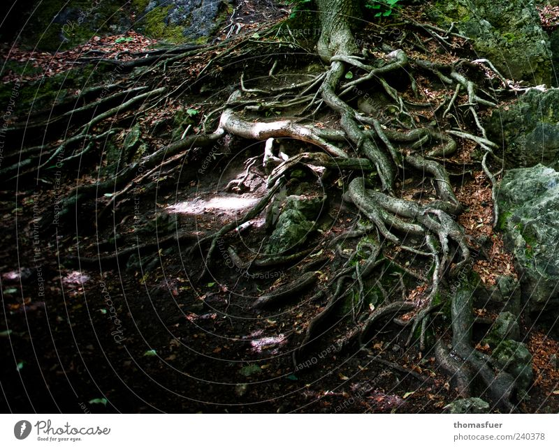 STOP Nature Earth Tree Natural Bizarre Growth Root Root of a tree Colour photo Exterior shot Detail Day Shadow Contrast Woodground