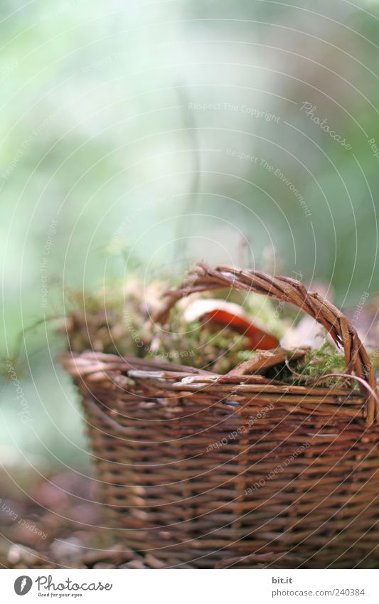 small basket Nature Plant Autumn Moss flaked Brown green Basket Wicker mesh Wicker basket Autumn leaves wood Carry handle Containers and vessels Still Life