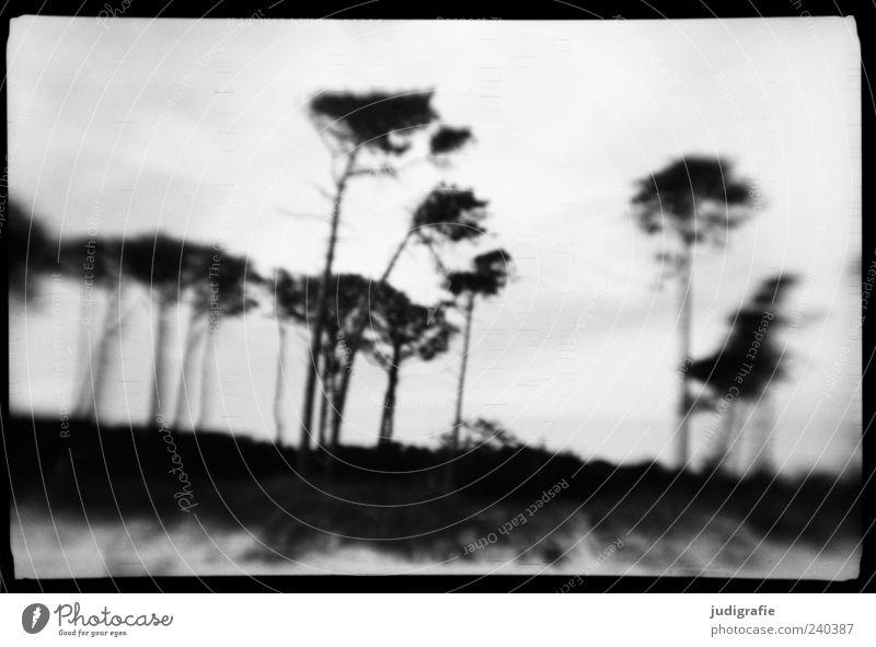 Nature White Tree Plant Ocean Beach Black Environment Landscape Dark Coast Moody Exceptional Natural Wild Baltic Sea