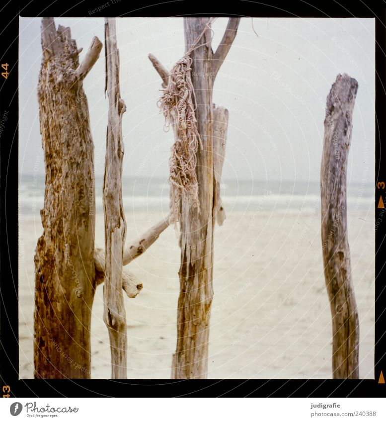 Nature Plant Ocean Beach Environment Wood Moody Exceptional Natural Wild Rope Branch Baltic Sea Vertical Darss Maritime