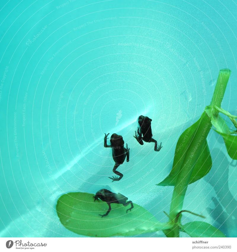 On your mark, get set, go! Animal Frog 3 Group of animals Baby animal Small Diminutive Turquoise Green Water Close-up Deserted Copy Space left Copy Space top