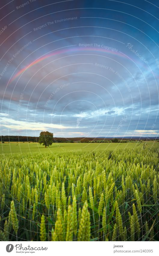 all over the place Environment Nature Landscape Sky Clouds Storm clouds Horizon Spring Summer Climate Weather Tree Agricultural crop Field Beautiful Blue Yellow