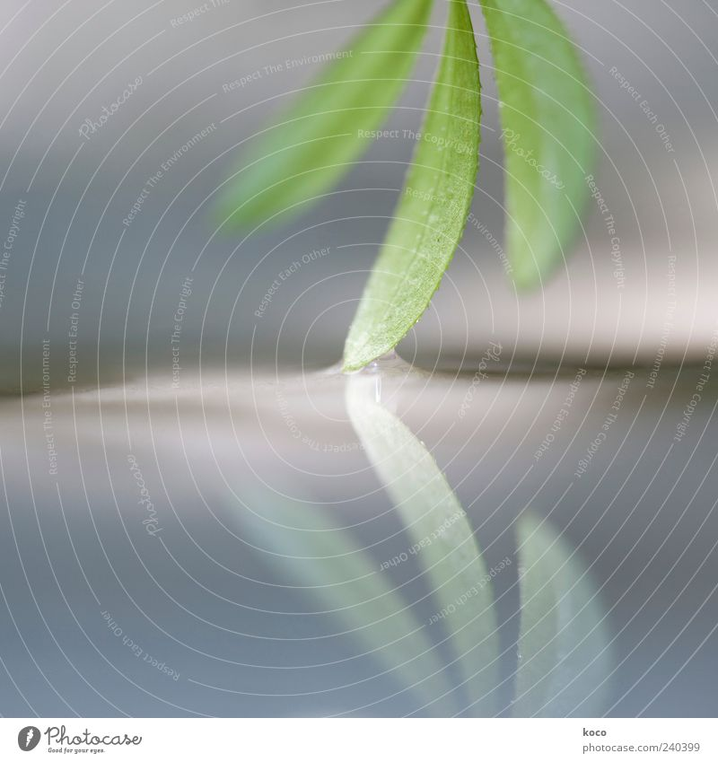 Touching Plant Sunlight Spring Summer Leaf Water Growth Esthetic Exceptional Fluid Small Wet Blue Gray Green Black White Beautiful Colour photo Detail