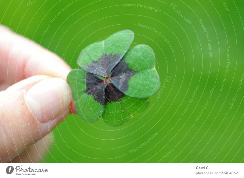 ...firmly under control Happy Fingers Thumb Spring Foliage plant Cloverleaf Four-leafed clover Meadow Good luck charm Sign Green Retentive Four-leaved