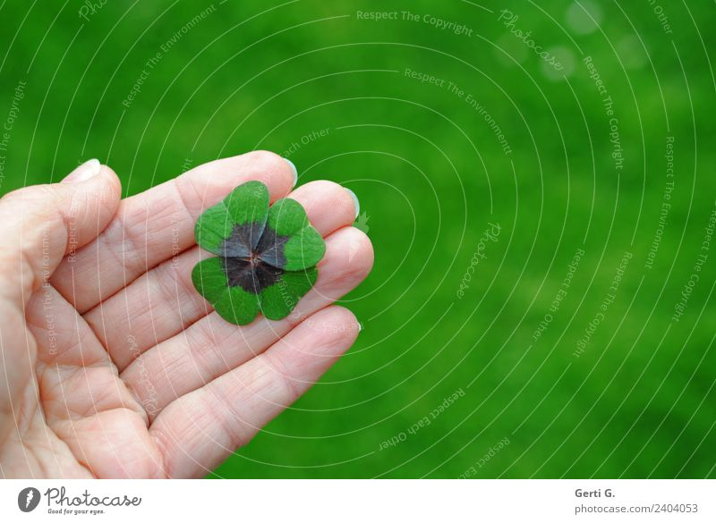Good luck. Happy Well-being Contentment Calm Life Hand Fingers palm Four-leafed clover Meadow Sign Good luck charm symbol of luck Green Colour photo