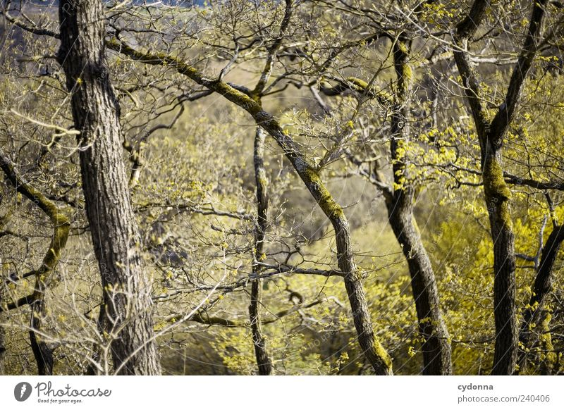 Nature Tree Forest Environment Spring Growth Esthetic Twigs and branches
