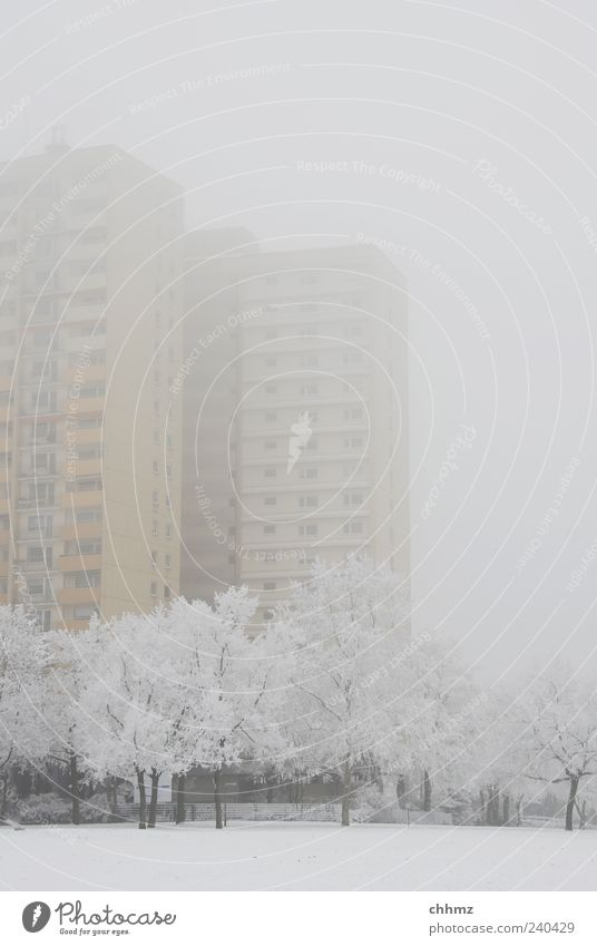 Hochaus in the fog Ice Frost Snow Tree Park Mainz High-rise Facade Balcony Window Fantastic Cold Yellow Gray Freeze Loneliness Climate Stagnating Fog Sadness
