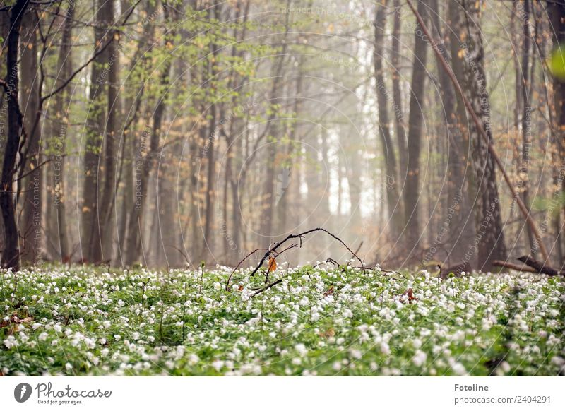 Nature Plant Beautiful Green Landscape White Tree Flower Forest Environment Spring Blossom Natural Brown Bright Fog