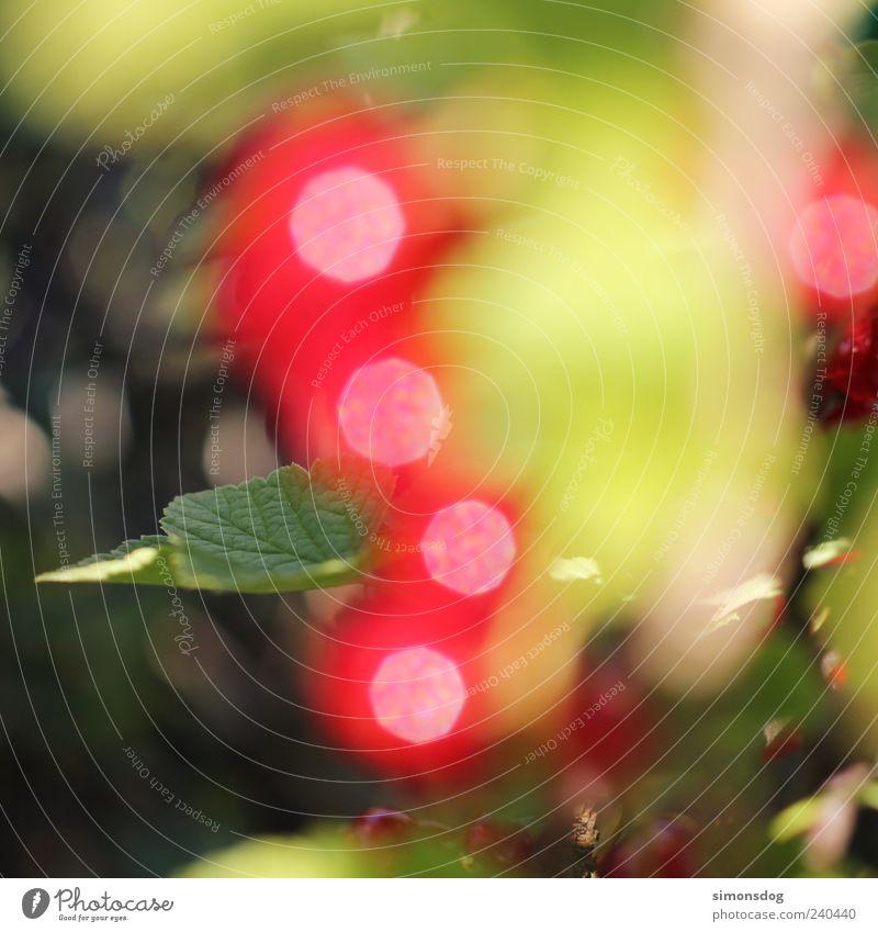 Green Red Leaf Colour Fruit Glittering Fresh Illuminate Bushes Warm-heartedness Uniqueness Creativity Discover Copy Space Inspiration