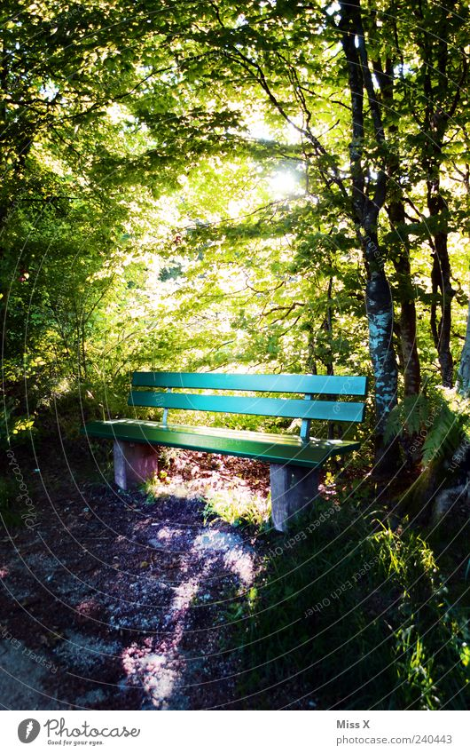 sunny seat Relaxation Calm Trip Nature Sunlight Spring Summer Beautiful weather Tree Park Forest Illuminate Bright Moody Hope Idyll Park bench Hiking trip Green