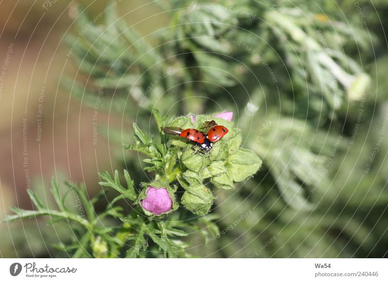 Fly, Beetle, fly Animal Animal face Wing Ladybird 1 Movement Blossoming Fragrance Flying Sit Wait Free Infinity Beautiful Small Above Brown Multicoloured Green