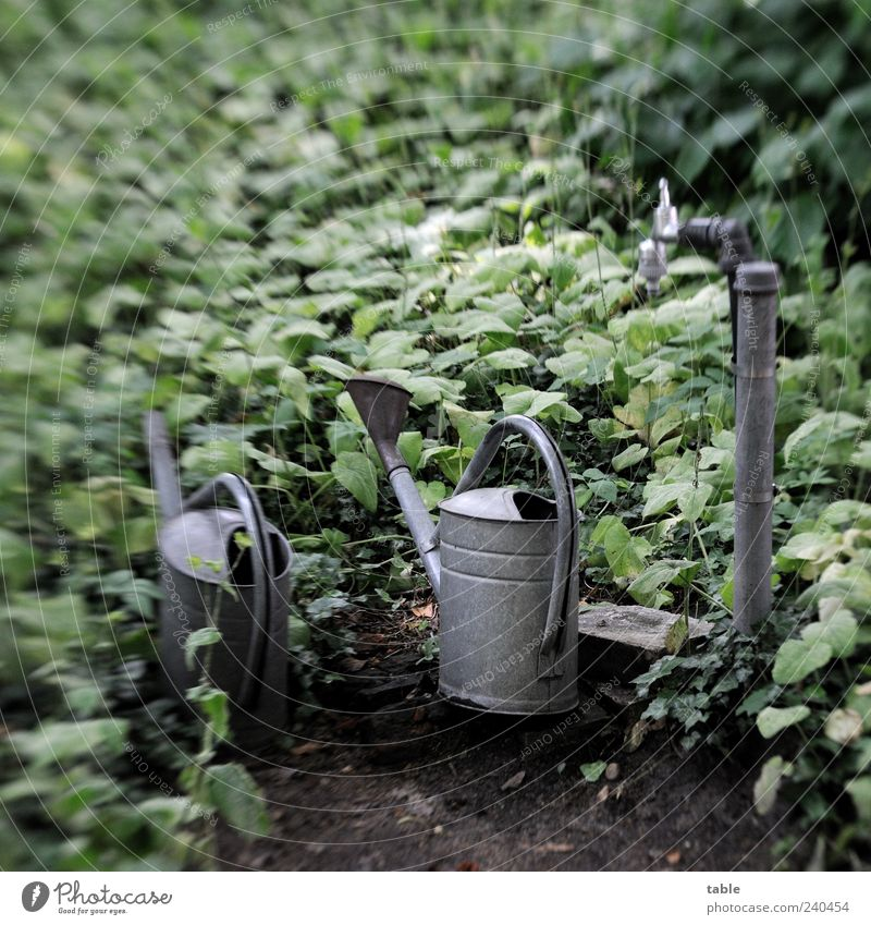 waiting Garden Plant Bushes Ivy Cemetery Metal Stand Wait Old Dark Gray Green Calm Sadness Grief Pain Longing Loneliness Nature Transience Tap Water pipe