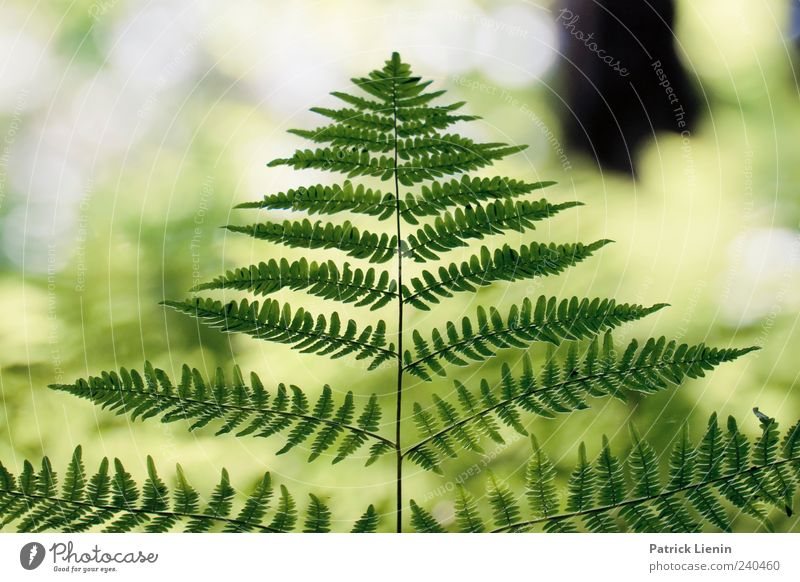 Nature Beautiful Plant Summer Forest Environment Bright Esthetic Wild Natural Uniqueness Elements Symmetry Human being Fern Pteridopsida