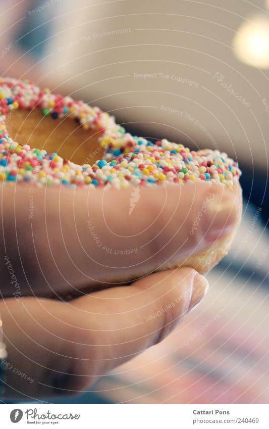 Hand Nutrition Food Fresh Fingers Sweet Round Touch To hold on Near Candy Make Delicious Breakfast Sugar Baked goods
