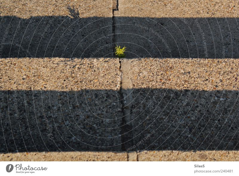 Green Plant Sun Yellow Stone Brown Stairs Concrete Asphalt Striped Seam Furrow Weed