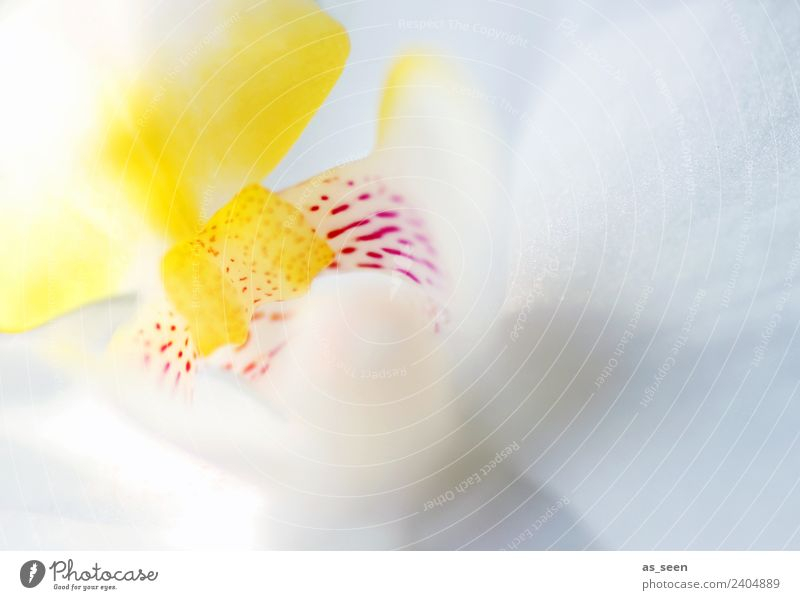 Nature Summer Plant Beautiful White Flower Eroticism Lifestyle Yellow Healthy Spring Pink Design Bright Modern