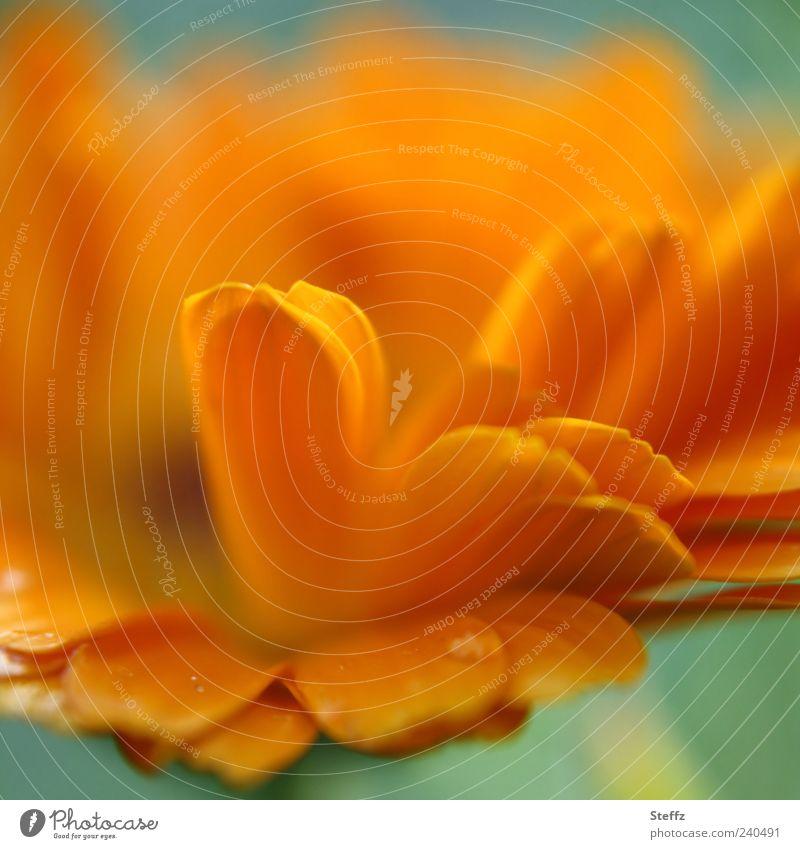 undoctored Flower Defiant Disheveled Brash Orange Summer hue Joie de vivre (Vitality) flowering flower Summerflower naturally Blossoming Fresh Summer feeling