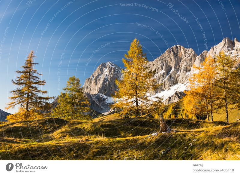 Nature Vacation & Travel Plant Landscape Tree Relaxation Calm Mountain Autumn Tourism Trip Hiking Illuminate Gold Idyll Joie de vivre (Vitality)