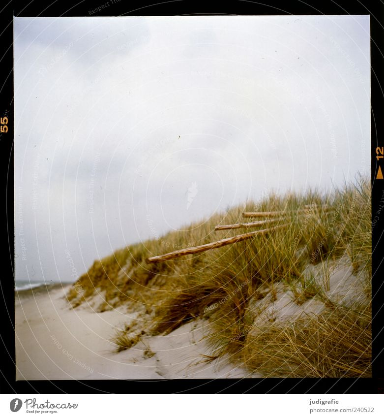 Darß Place Environment Nature Landscape Plant Sky Clouds Grass Coast Beach Baltic Sea Ocean Darss Western Beach Sand Wood Natural Wild Moody Calm Colour photo
