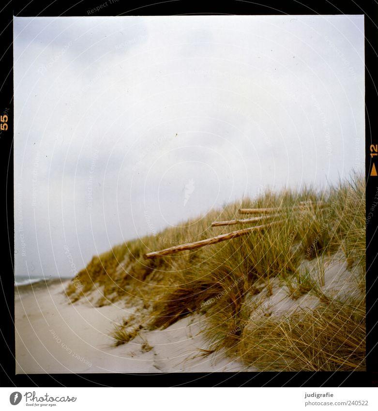 Sky Nature Plant Ocean Beach Clouds Calm Environment Landscape Grass Wood Coast Sand Moody Natural Wild