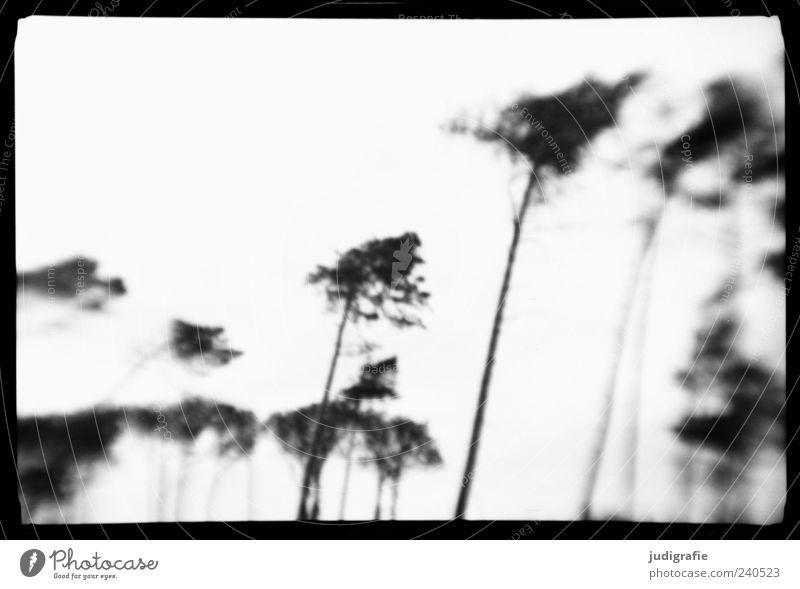 Nature White Tree Plant Black Environment Dark Coast Moody Exceptional Natural Wild Frame Black & white photo Wind cripple
