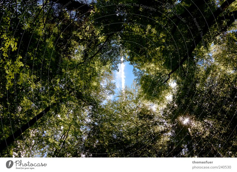 Sky Nature Blue Green Tree Flying Beautiful weather Vapor trail Skyward Stripe Leaf canopy Ray of hope