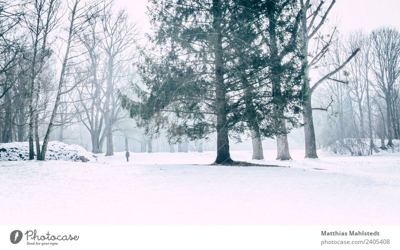Lost in snow Landscape Winter Fog Ice Frost Snow Tree Park Going Green White Moody Longing Loneliness Relaxation Peace Far-off places Munich