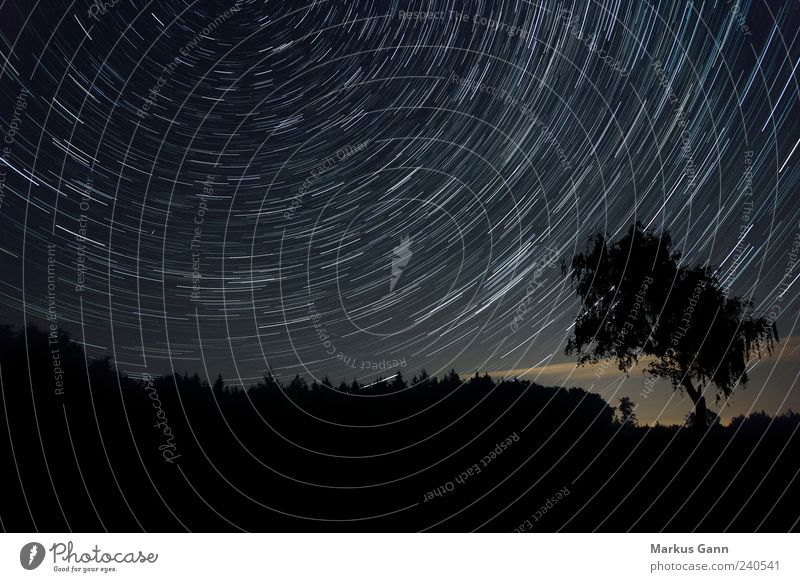 night sky Nature Landscape Sky Night sky Stars Movement Peace Time Astronomy Horizontal Circle Tracks Line Black Tree Forest North earth rotation Universe