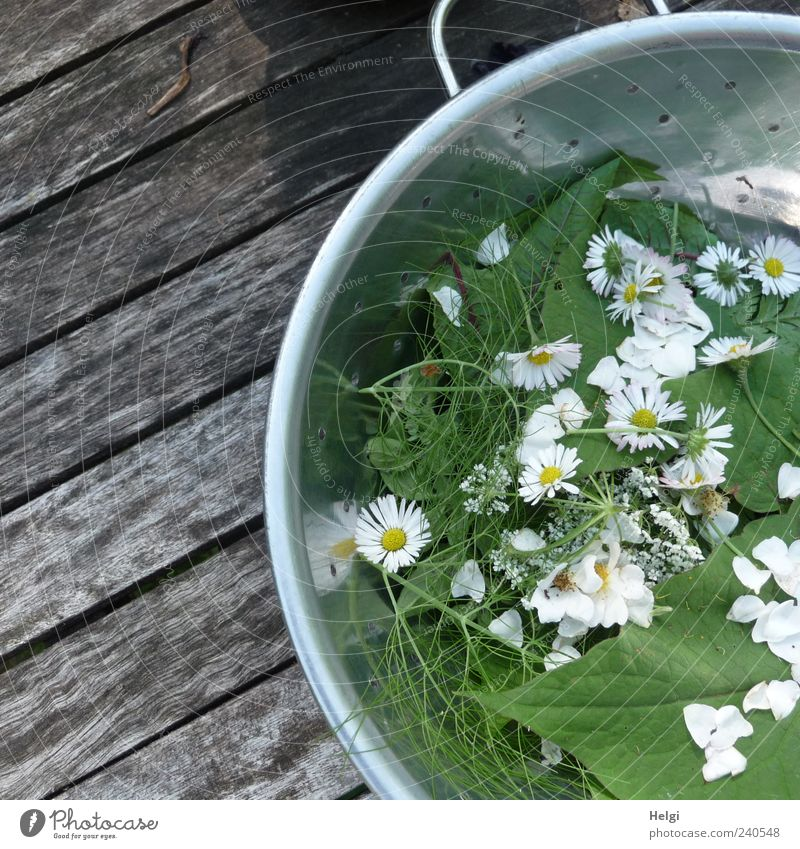 fresh herbs and flowers in a metal bowl on a wooden table Food Lettuce Salad Herbs and spices Nutrition Organic produce Vegetarian diet Bowl Sieve Plant Spring