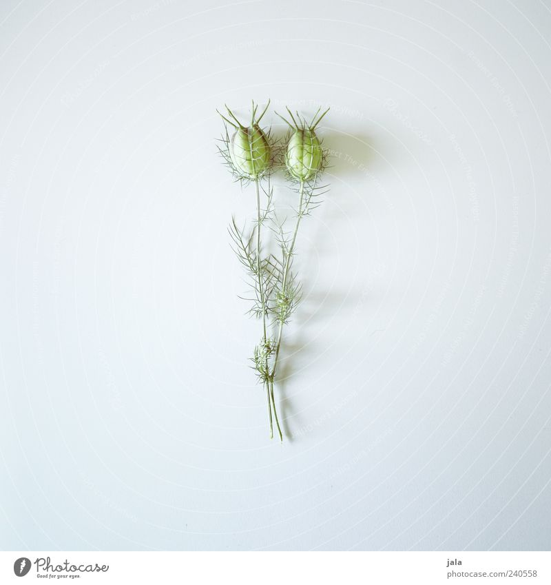 Green Beautiful Plant Flower Gray Elegant Esthetic Simple Still Life Bright background