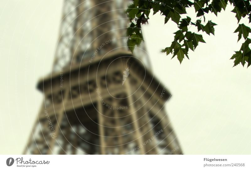la tour eiffel Vacation & Travel Tourism Trip Sightseeing City trip Plant Tree Leaf Capital city Downtown Tower Manmade structures Architecture