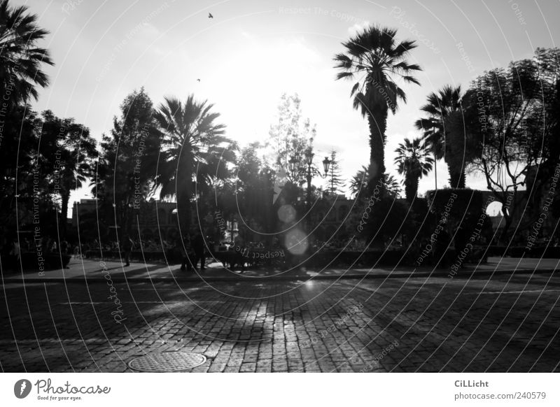 palm paradise Beautiful weather Happiness Contentment Joie de vivre (Vitality) Calm Wanderlust Vacation & Travel Palm tree Paradise Paving stone