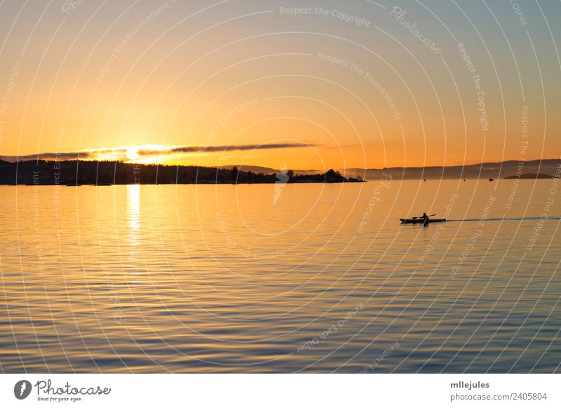 Oslo Fjord Kayaking at sunset Lifestyle Joy Relaxation Vacation & Travel Adventure Sun Beach Ocean Island Sports Nature Landscape Sky Lake Harbour Watercraft