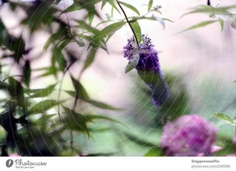 Nature White Green Plant Summer Calm Spring Blossom Garden Contentment Esthetic Violet Positive Vista Lilac