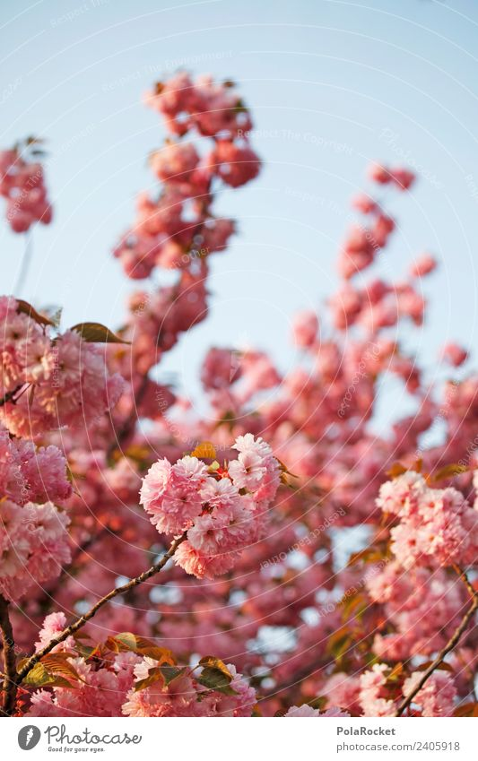 #A# Spring in Dresden Art Esthetic Spring day Spring colours Spring celebration Blossoming Green pastures Flowering plant Pink Colour photo Subdued colour
