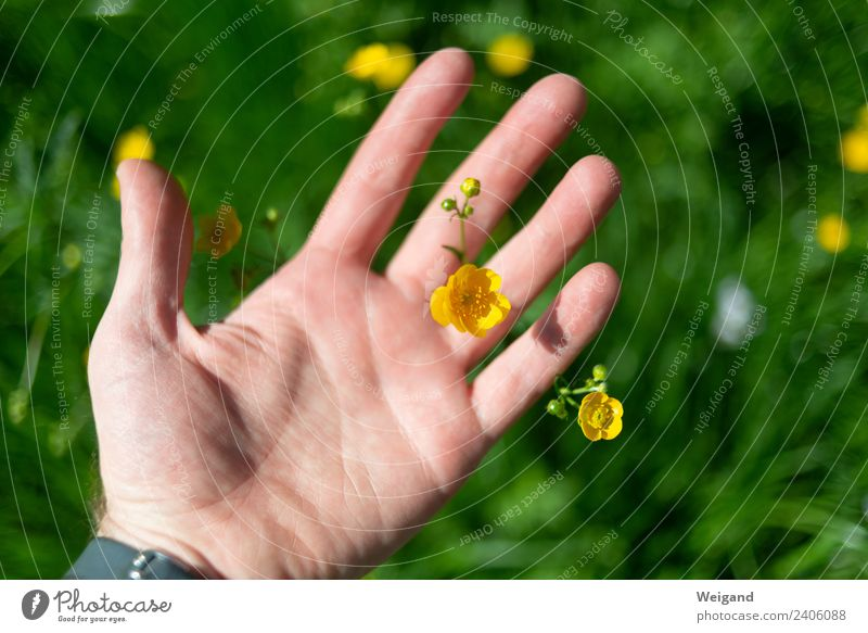 flower hand Wellness Life Harmonious Well-being Contentment Senses Relaxation Calm Meditation Fragrance Hand Observe Yellow Green Joy Happy Happiness