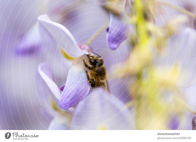 bee Environment Nature Plant Animal Blossom Farm animal Wild animal Flying To feed Bee Honey bee Environmental protection Environmental pollution die of insects