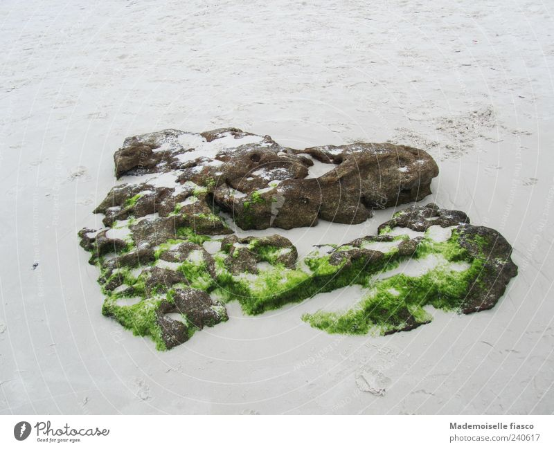 Stone hearts on the beach Sand Moss Heart Brown Gray Green Uniqueness Colour photo Exterior shot Copy Space top Copy Space bottom Day Bird's-eye view Deserted