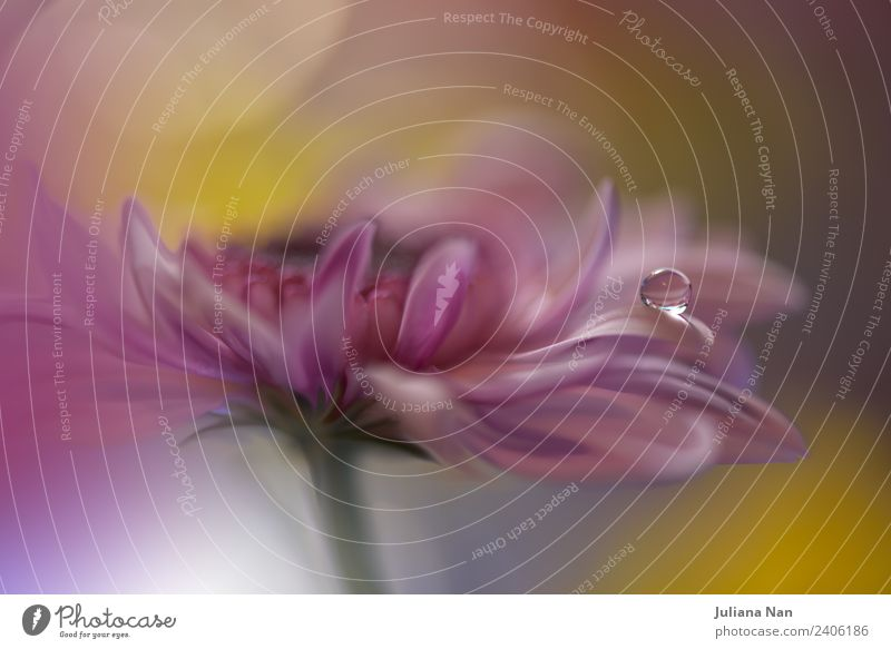 Gentle romantic artistic image. Soft pastel background blur . Lifestyle Elegant Design Beautiful Relaxation Summer Garden Decoration Furniture Wallpaper Art