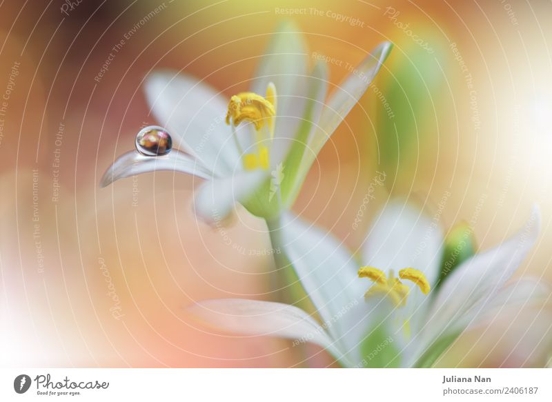 Gentle romantic artistic image. Soft pastel background blur . Nature Plant Beautiful Water Flower Lifestyle Yellow Environment Love Natural Style Art